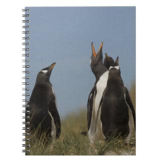 Pingüinos de Gentoo (Pygoscelis Papua) que miran p Libros De Apuntes Con Espiral
