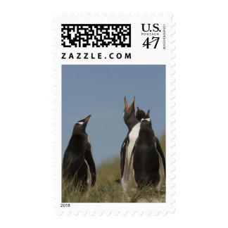 Pingüinos de Gentoo (Pygoscelis Papua) que miran Sello Postal