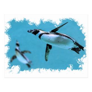 Pingüinos de Humboldt debajo del agua en marco irr Postal