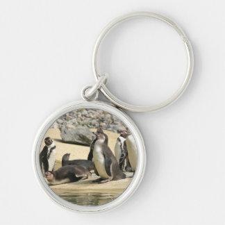 Pingüinos de Humboldt Llaveros