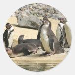 Pingüinos de Humboldt Pegatinas Redondas