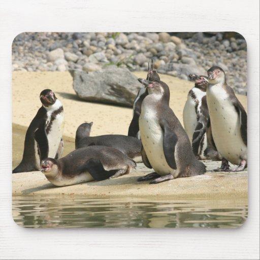 Pingüinos de Humboldt Tapete De Ratones