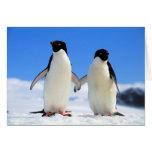 pingüinos de los amantes felicitacion
