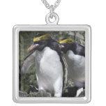 Pingüinos de los macarrones, Georgia del sur Colgante Cuadrado