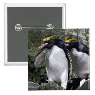 Pingüinos de los macarrones, Georgia del sur Pin Cuadrado