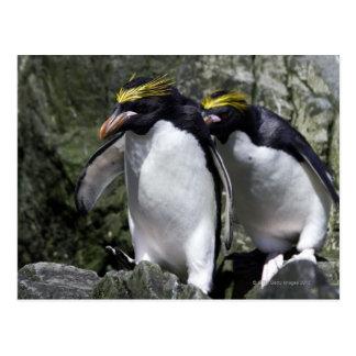 Pingüinos de los macarrones, Georgia del sur Postal