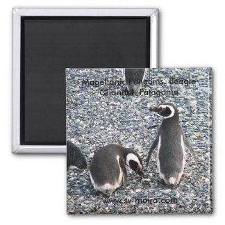 Pingüinos de Magellanic canal del beagle Patagon Imán De Frigorifico