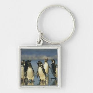 Pingüinos de Magellanic, Spheniscus Llaveros Personalizados