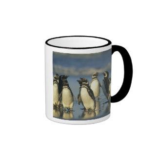 Pingüinos de Magellanic Spheniscus Tazas De Café