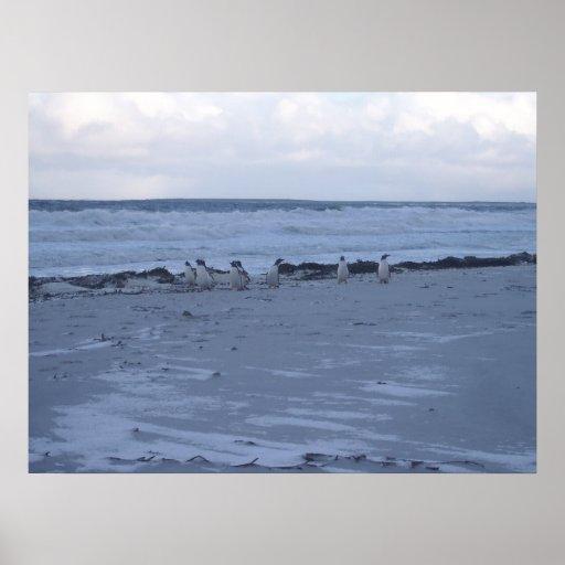 Pingüinos de Malvinas Posters