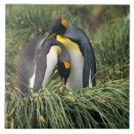 Pingüinos de rey nuzzling azulejo cuadrado grande
