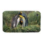 Pingüinos de rey nuzzling iPhone 3 cobreturas