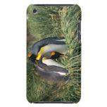 Pingüinos de rey nuzzling iPod Case-Mate carcasa