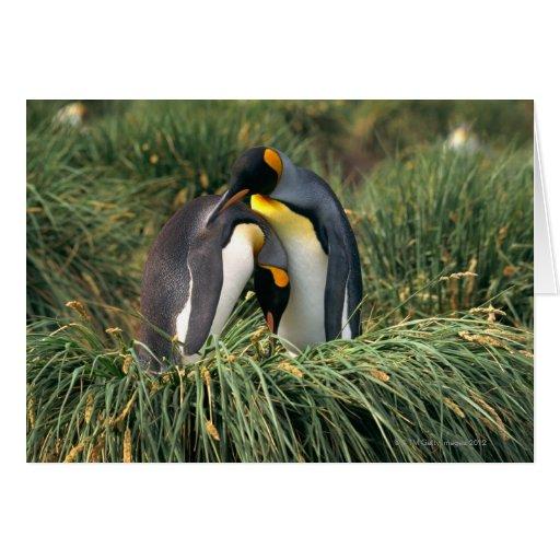 Pingüinos de rey nuzzling tarjeta de felicitación
