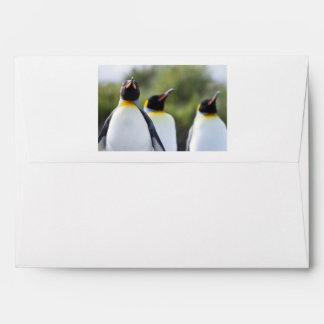 Pingüinos de rey sobres