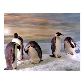 Pingüinos de rey tarjetas postales