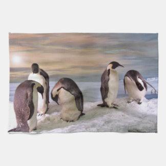 Pingüinos de rey toalla