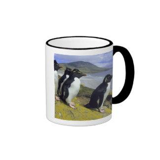 Pingüinos de Rockhopper, (chrysocome del Taza A Dos Colores