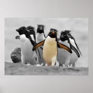 Pingüinos de Rockhopper Poster