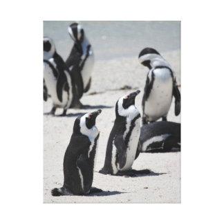 Pingüinos de Suráfrica Impresiones De Lienzo