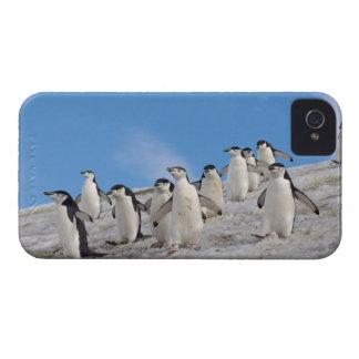 pingüinos del chinstrap, Pygoscelis la Antártida, Case-Mate iPhone 4 Coberturas