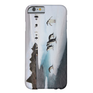pingüinos del chinstrap, Pygoscelis la Antártida, Funda Para iPhone 6 Barely There