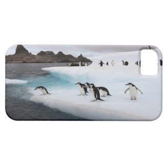 pingüinos del chinstrap, Pygoscelis la Antártida, iPhone 5 Fundas