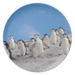 pingüinos del chinstrap, Pygoscelis la Antártida, Plato De Comida