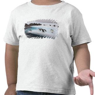 pingüinos del chinstrap, Pygoscelis la Antártida,  Camiseta