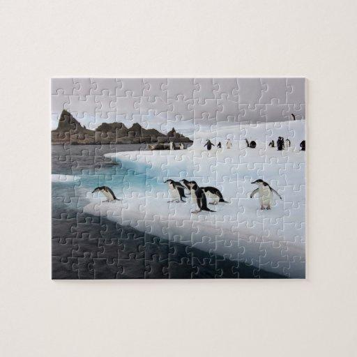 pingüinos del chinstrap, Pygoscelis la Antártida,  Puzzles Con Fotos