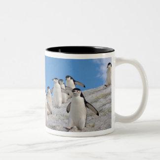 pingüinos del chinstrap, Pygoscelis la Antártida, Taza Dos Tonos