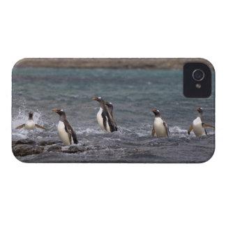pingüinos del gentoo, Pygoscelis Papua, saltando iPhone 4 Case-Mate Cárcasas
