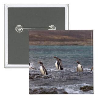 pingüinos del gentoo, Pygoscelis Papua, saltando Pin Cuadrada 5 Cm