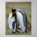 Pingüinos divertidos posters