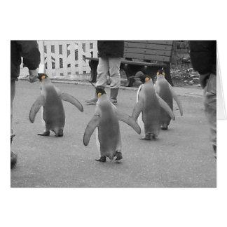 Pingüinos en desfile tarjeta pequeña