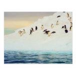 Pingüinos en el hielo, postal