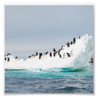 Pingüinos en el iceberg impresiones fotograficas