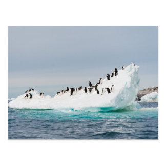 Pingüinos en el iceberg tarjetas postales