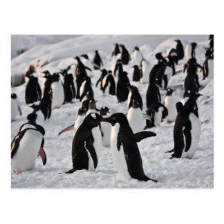 Pingüinos en el juego