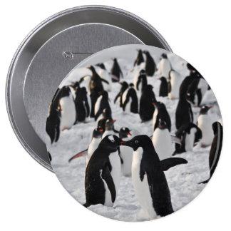 Pingüinos en el juego pin redondo 10 cm