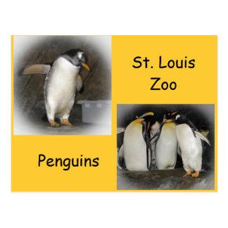 Pingüinos en el parque zoológico postales