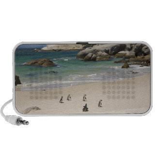 Pingüinos en la playa de los cantos rodados ciuda notebook altavoces