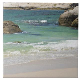 Pingüinos en la playa de los cantos rodados, ciuda azulejo cuadrado grande