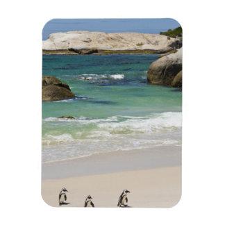 Pingüinos en la playa de los cantos rodados, ciuda iman de vinilo