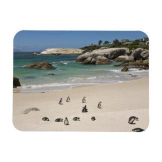 Pingüinos en la playa de los cantos rodados, ciuda imán rectangular
