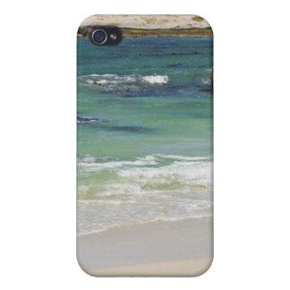 Pingüinos en la playa de los cantos rodados, ciuda iPhone 4 fundas