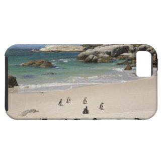 Pingüinos en la playa de los cantos rodados, funda para iPhone 5 tough
