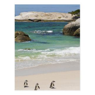 Pingüinos en la playa de los cantos rodados, tarjeta postal