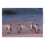 Pingüinos en la tarjeta de la playa