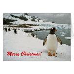 Pingüinos en tarjeta de Navidad de la Antártida